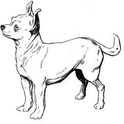 Chihuahua clipart Free Chihuahua Chihuahua Clipart