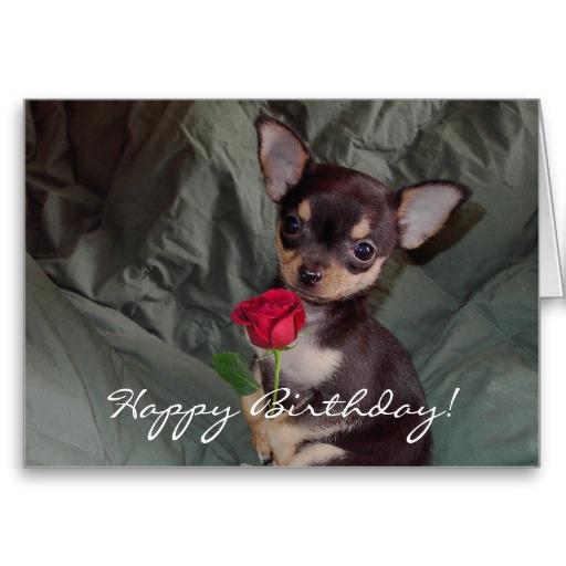 Chihuahua clipart birthday Birthday Puppy Happy Birthday Happy