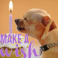 Chihuahua clipart birthday Make Dog Birthday Birthday decorating