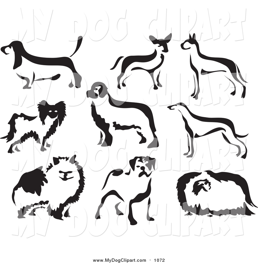 Chihuahua clipart black and white Royalty White Dogs Dog Chihuahua