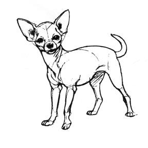 Chihuahua clipart drawing Recherche de draw draw «