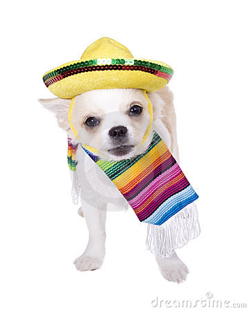 Chihuahua clipart celebrity Clipart sombrero mexican (24+) a
