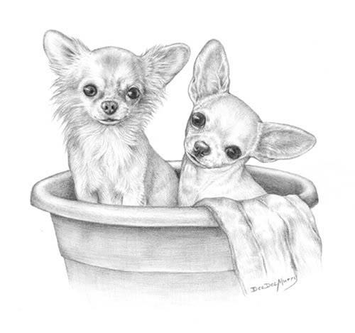 Drawn puppy small dog Pixie Chihuahua _ Drawing Chihuahua