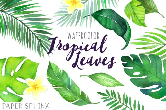Leaves clipart tropical leaf #5