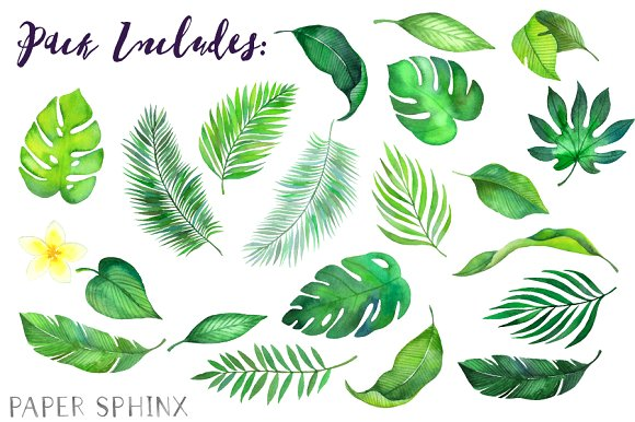 Leaves clipart tropical leaf #1