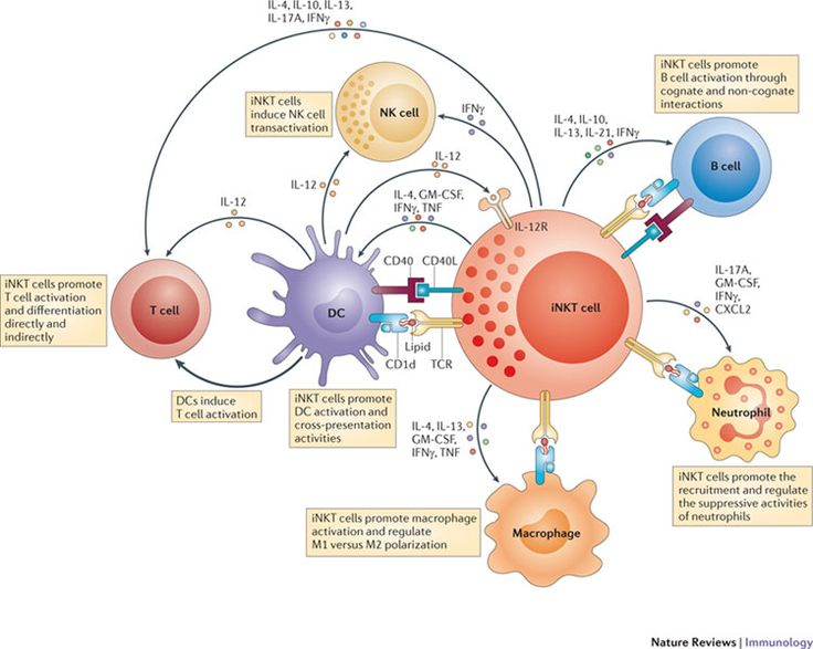 Chill clipart immune system Killer natural diseases  scheme