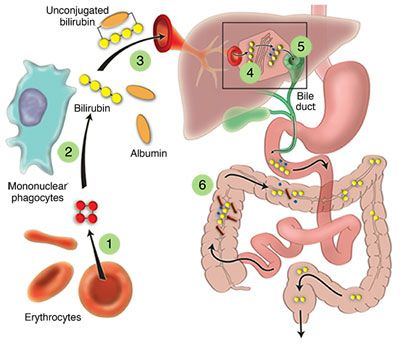 Chill clipart immune system Best 135 on images