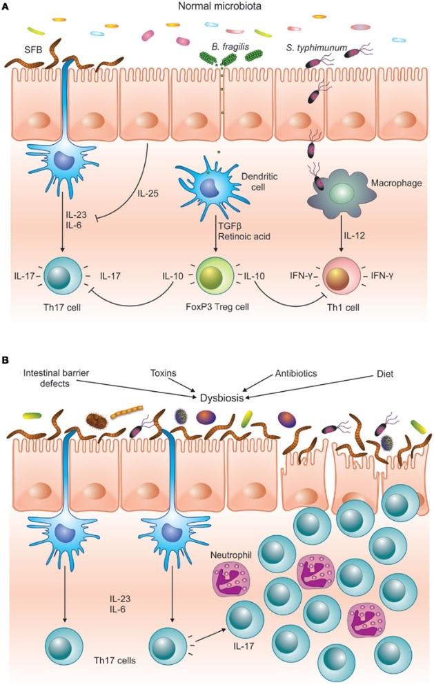 Chill clipart immune system Series Wheat Immune It Always