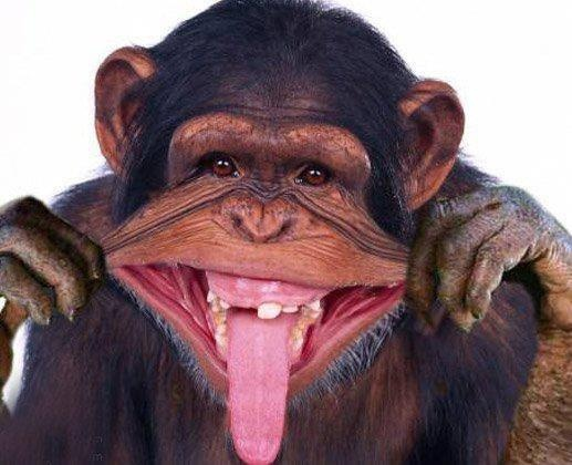 Chimpanzee clipart moneky Pin 145 Find on this