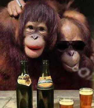 Chimpanzee clipart moneky Pics Funny funny Funny rondom