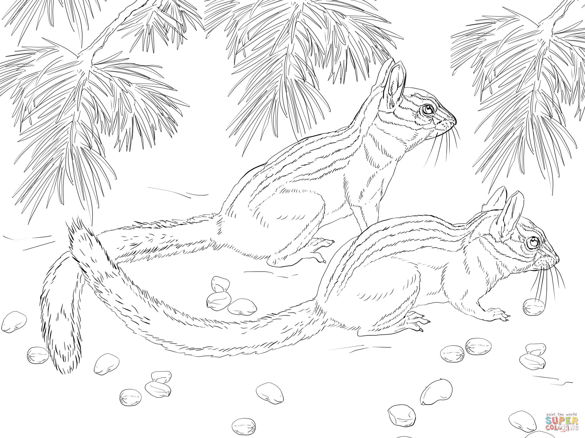 Chipmunk clipart coloring Page Printable the Eared coloring