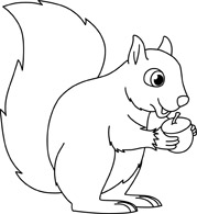 Drawn squirrel hand drawn Clipart Outline Frog Clipart Panda