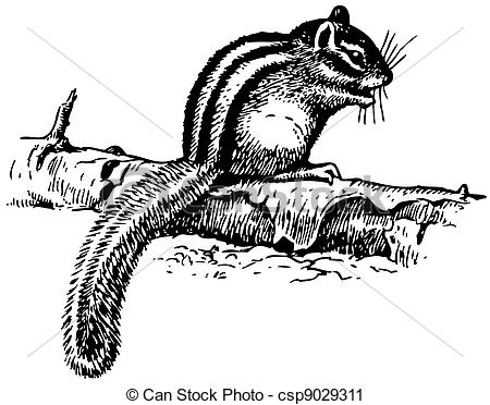 Drawn rodent rodent On Ground Vector Squirrel Clip