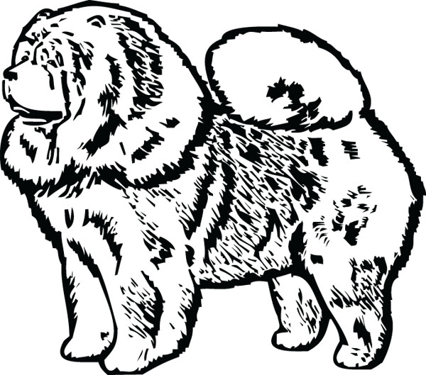 Chow Chow clipart Graphic Engraved Side Art Breed