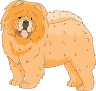 Chow Chow clipart Search Results Clipart dog