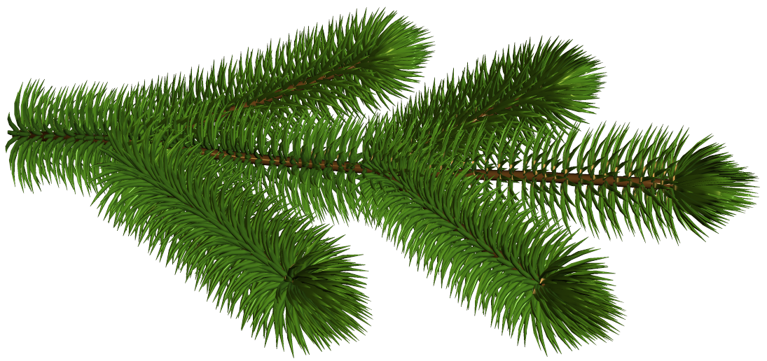 Pine clipart transparent Pine Gallery Picture Branch
