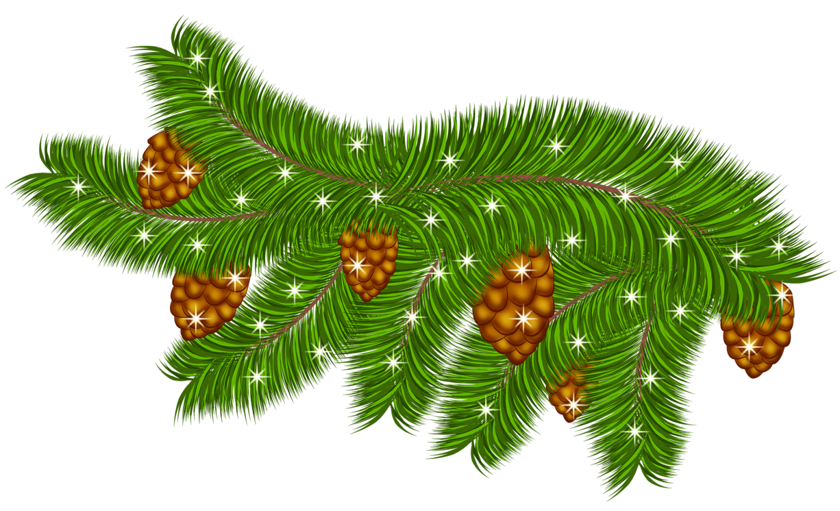 Branch clipart pinecone Transparent Pine PNG PNG Pine