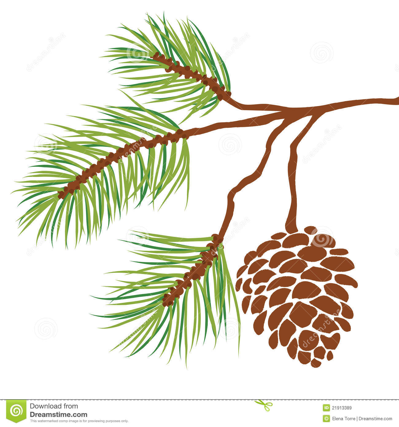 Drawn fir tree And with Cone Vector Tree