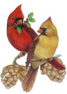 Wren clipart robin bird Vintage Download Clipart Clipart Cardinal
