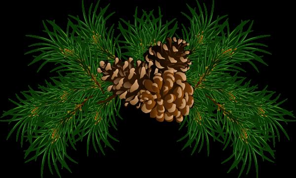 Branch clipart pinecone Recent updates Gallery 0 0