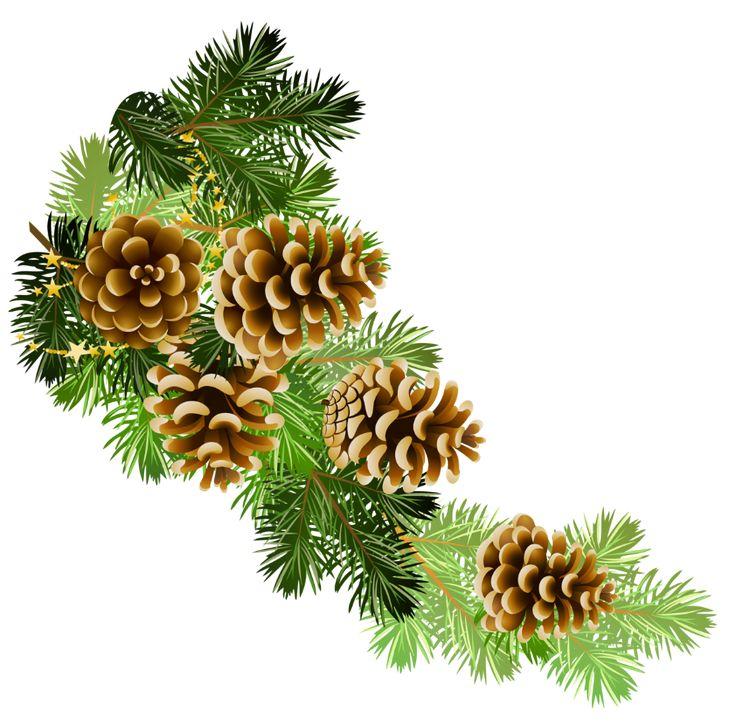 Pine Cone clipart corner Christmas bough bough clipart clipart