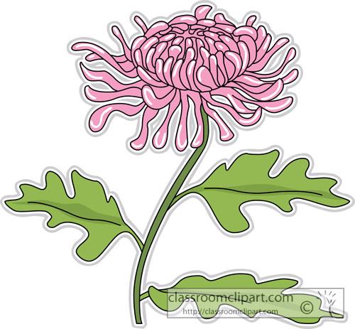 Chrysanthemum clipart Chrysanthemum mouse Illustrations Flowers 500x463