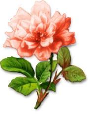 Chrysanthemum clipart Peach Free Chrysanthemum Clipart chrysanthemum