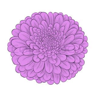 Chrysanthemum clipart Chrysanthemum Pink Clip Clipart Clip