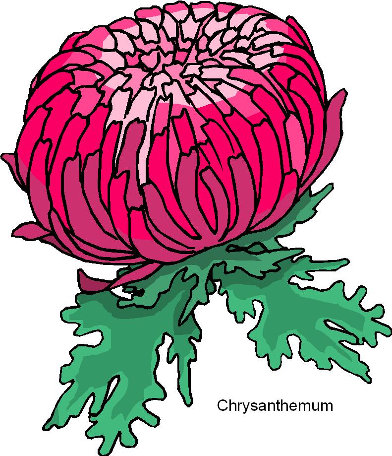 Chrysanthemum clipart Flower Chrysanthemum Free Microsoft Free