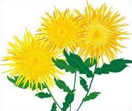 Chrysanthemum clipart Chrysanthemum Free Chrysanthemum Clipart Clipart