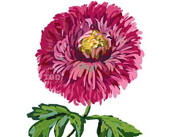 Chrysanthemum clipart Art Chrysanthemum Art – Chrysanthemum