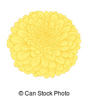 Yellow Flower clipart chrysanthemums Yellow  isolated background beautiful