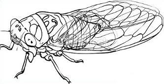 Cicada clipart Cicada Cicada Insect Clipart Free