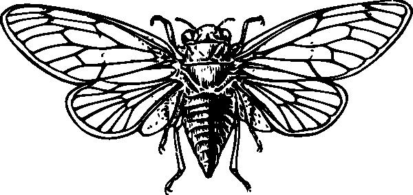 Cicada clipart Online Download  image vector
