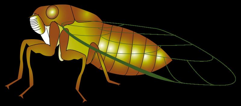 Cicada clipart  Cicada Clip Art Free