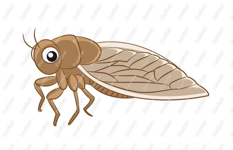 Cicada clipart Cicada Art Vector Cartoon Clip