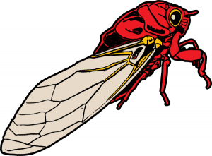 Cicada clipart Cicada Clip Art Download Cicada