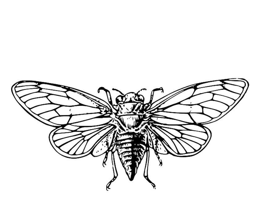 Cicada clipart cute Coloring coloring Printable page: –