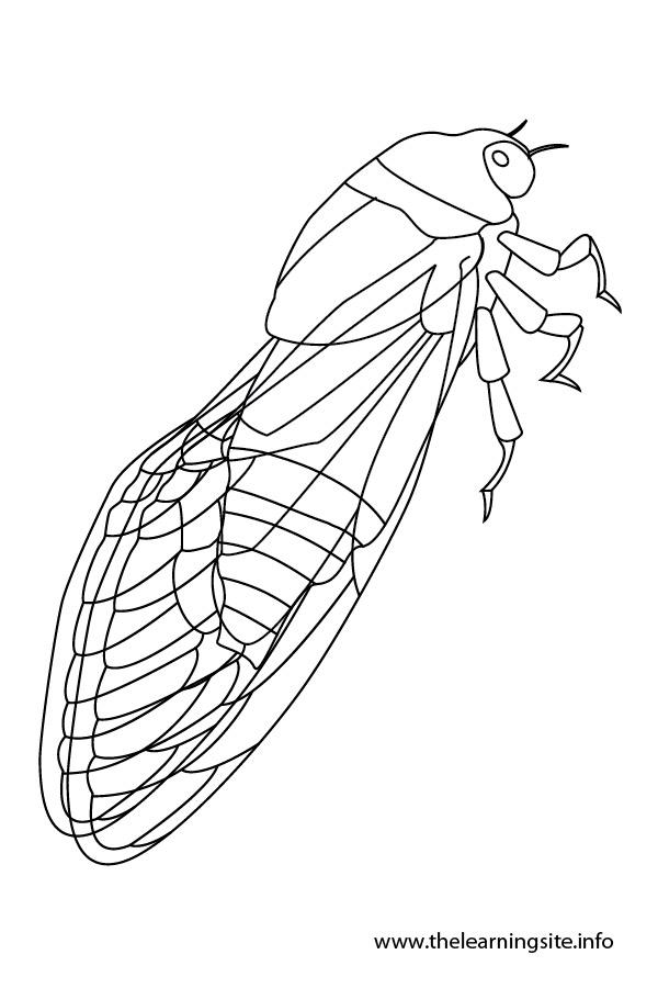 Cicada clipart cute Coloring coloring Cicada Download drawings