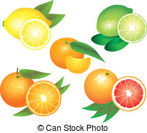 Citrus clipart orange fruit 16 Citrus photo popular art