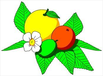 Citrus clipart Free Free citrus Clipart Graphics