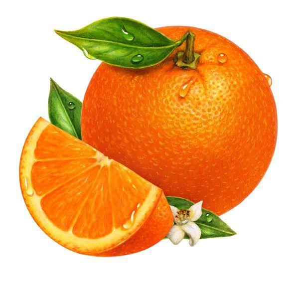 Orange (Fruit) clipart sour food And Pin Clip Pinterest Art