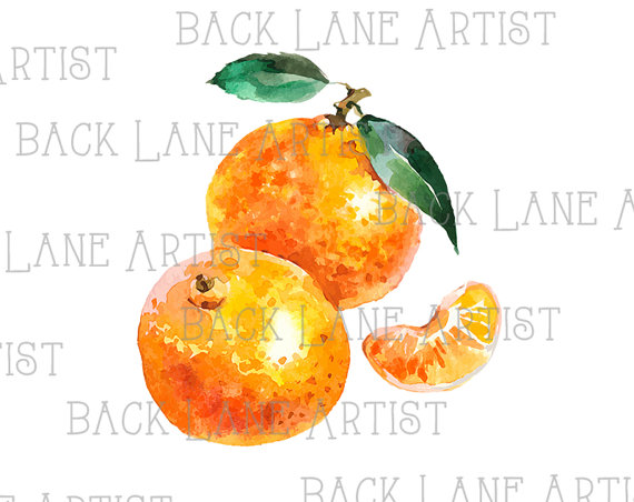 Tangerine clipart Lineart Tangerine from Etsy Drawing