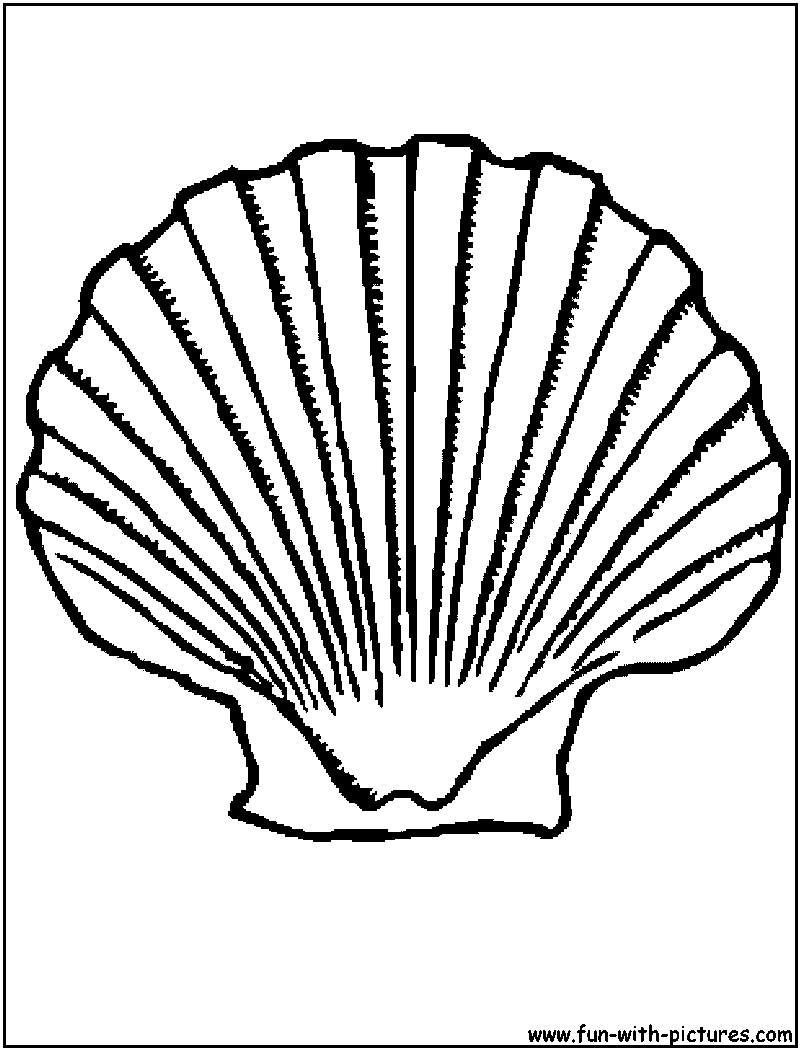 Shell clipart colouring page #6