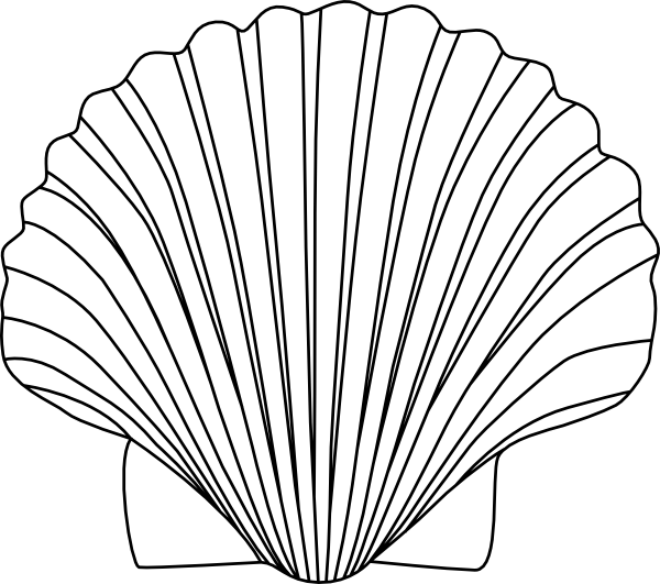 Amd clipart shell  Coloring drawing Zigzag White
