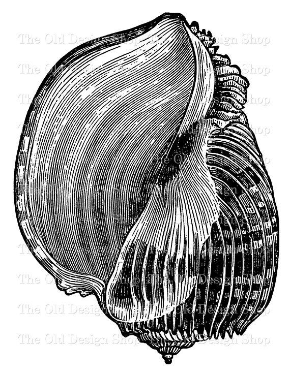 Clams clipart vintage Illustration Imperial Art Transfer best