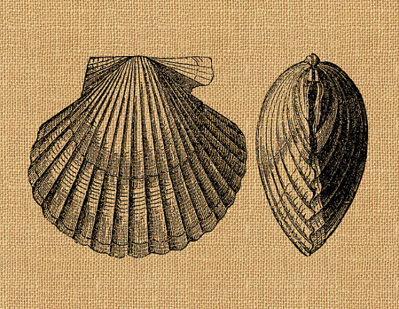 Clams clipart vintage Antique Scallop Printable Transfer Graphic
