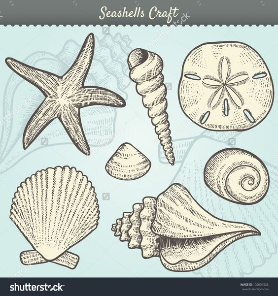 Clams clipart vintage Vintage Vector shells conch In