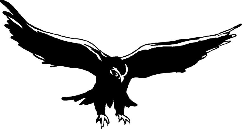 Bird clipart falcon Bird Download Falcon Clipart Bird
