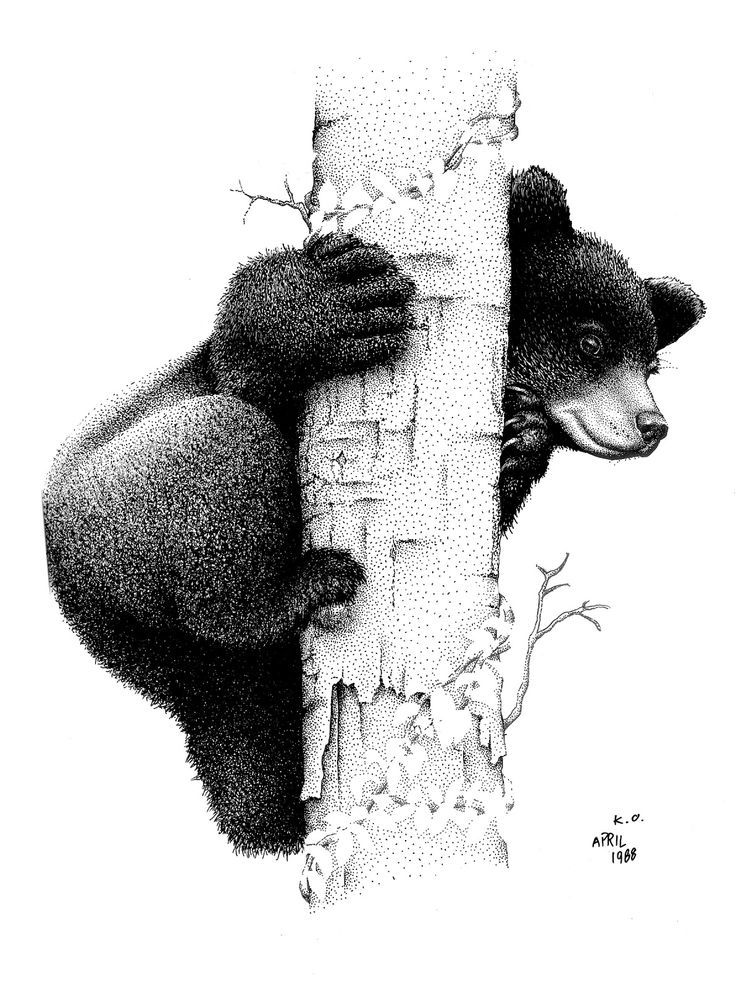 Bear Cub clipart drawn Black on ideas tattoo Best